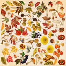 """Лист с картинками для вырезания """"Autumn Botanical Diary"""""""