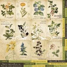 """Dekoratiivsed kaardid """"Botany Summer"""" (vene keeles)"""