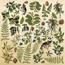 "Decorative sheet for cutting ""Botany Summer"""