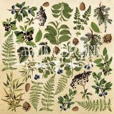 """Лист с картинками для вырезания """"Botany Summer"""""""