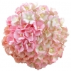 100 MIXED PINK COLOUR SWEETHEART BLOSSOM.jpg