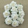 20 WHITE PAPER COTTAGE ROSES 2.jpg